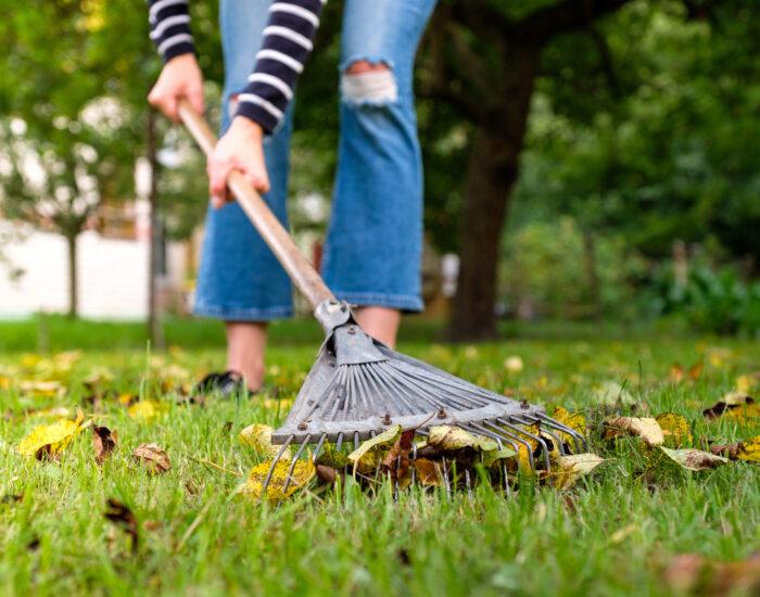 Fall clean blog